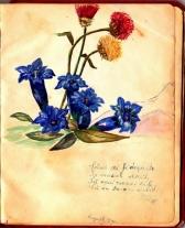 album_arad_1940_0033