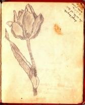 album_arad_1940_0057